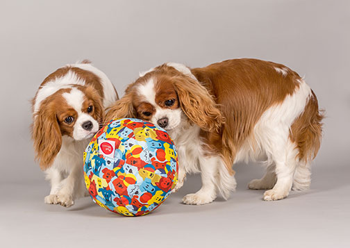 Dog with a PetBloon